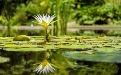 Blühmoment – Erkenne geduldig deine richtige Zeit